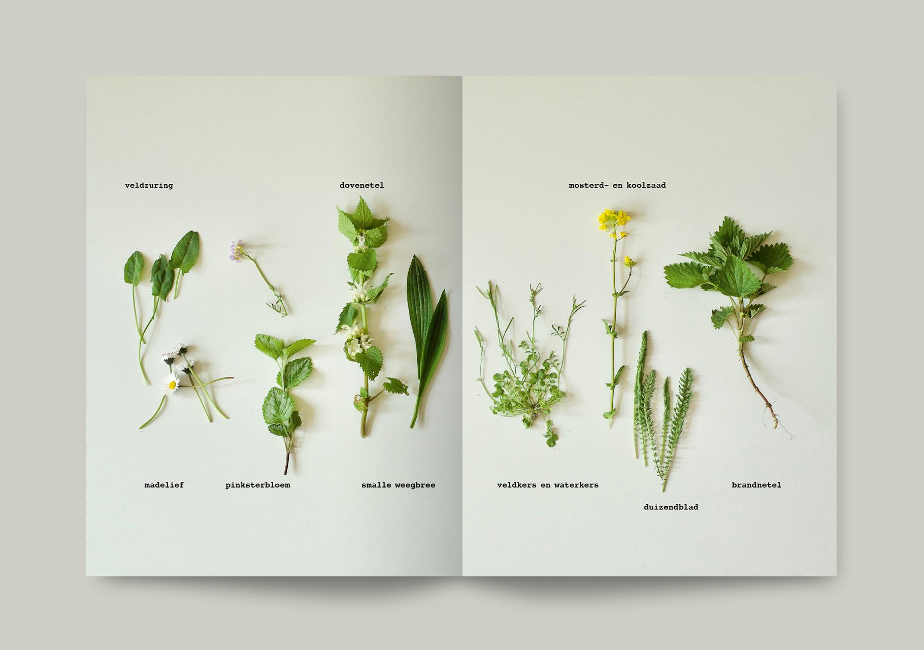 Plant_spread3